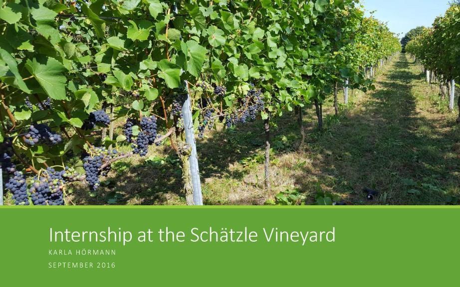 UCF-Hoermann-Schaetzle-Vineyard