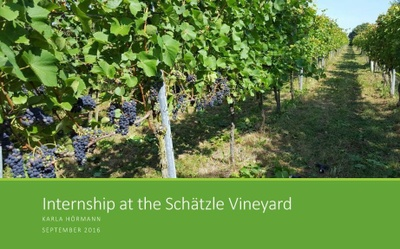 UCF-Hoermann-Schaetzle-Vineyard