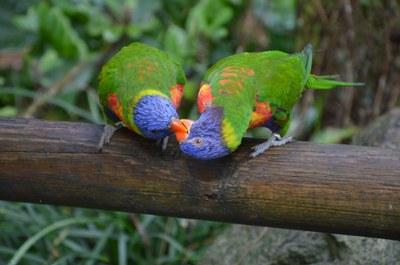FW Biodiversity